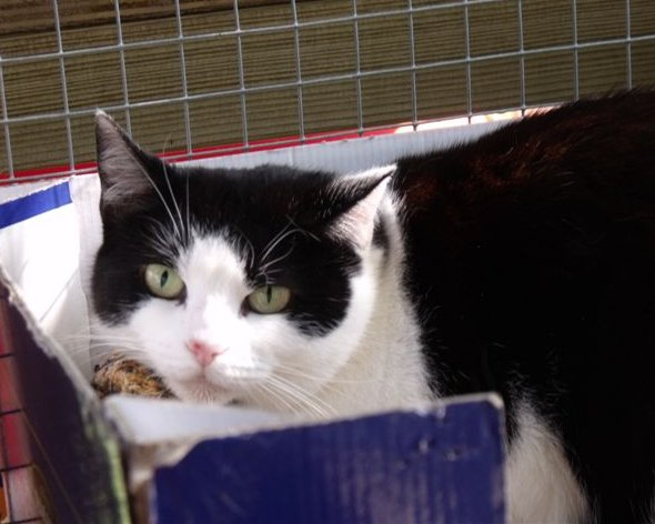 Daisy is a very pretty 6 year old cat needing a home preferable as the only cat where she will be adored and loved, can you give Daisy a home?